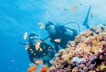 diving-in-Australia-1