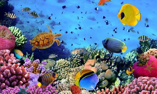 diving-in-Australia-2