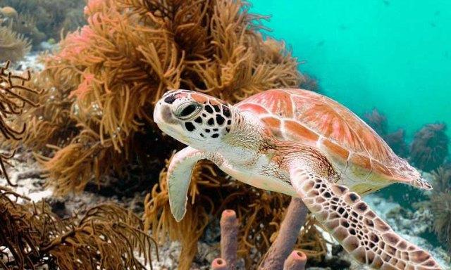 diving-in-Australia-3