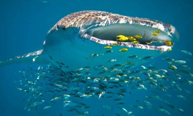 diving-in-Australia-4