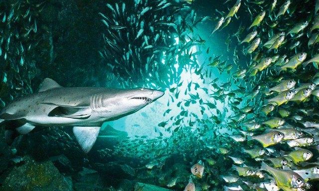 diving-in-Australia-5