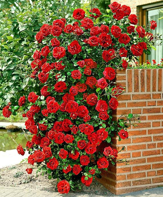 climbing flowers 3