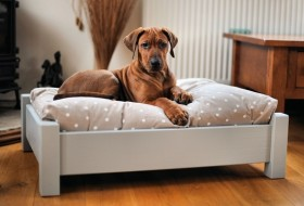 Buy Dog Bed