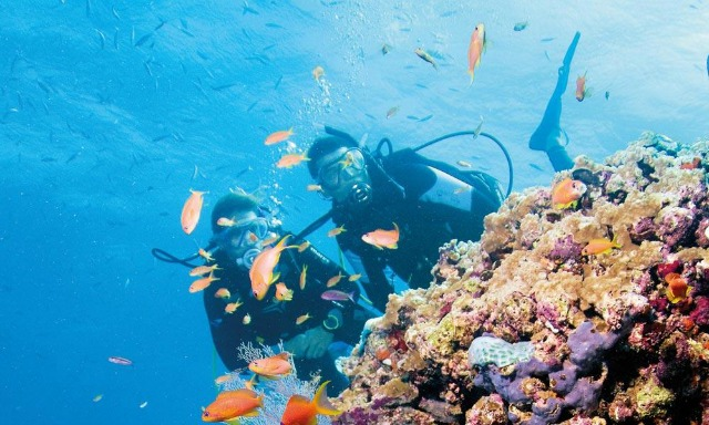 Wake Up the Adventurer in You and Come Scuba Diving in Australia