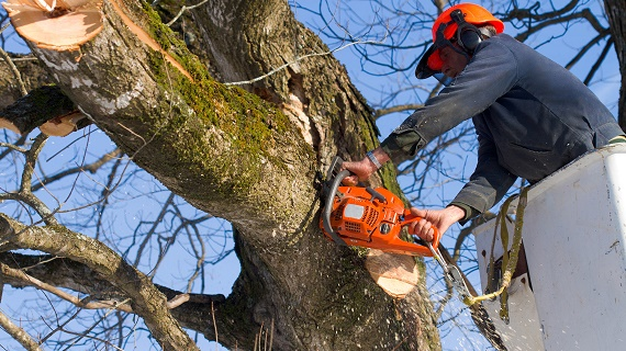 Trees Require Care: The Reasons to Hire Professional Arborists