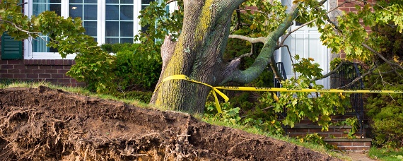 emergency tree removal service