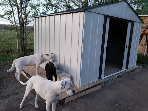 metal dog house