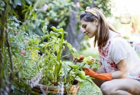 home gardening tools and equipment