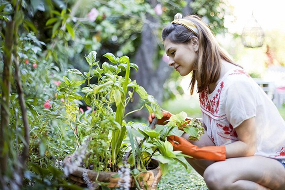 Gardening Tools and Equipment That Can Improve Your Gardening Experience