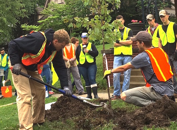 professional tree planting