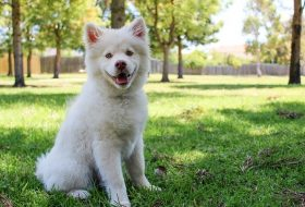 What is the best flea and tick treatment for dogs