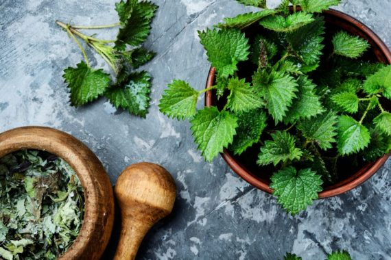 properties-of-stinging-nettle- supplement for prostate