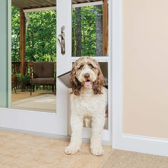 cute dog in front of a glass dog door