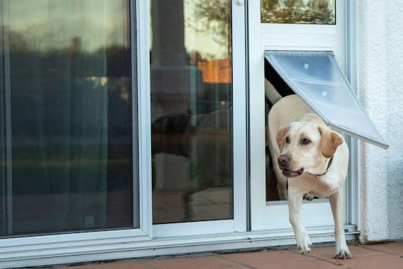 dog running out of glass door