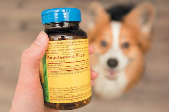 supplements for dogs